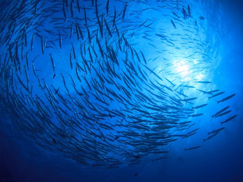 روز جهانی اقیانوس